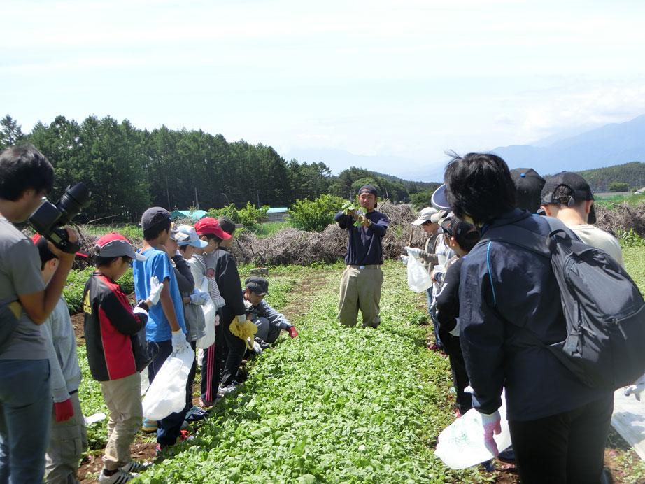 今年も都立小学校の農業体験受入れをしています