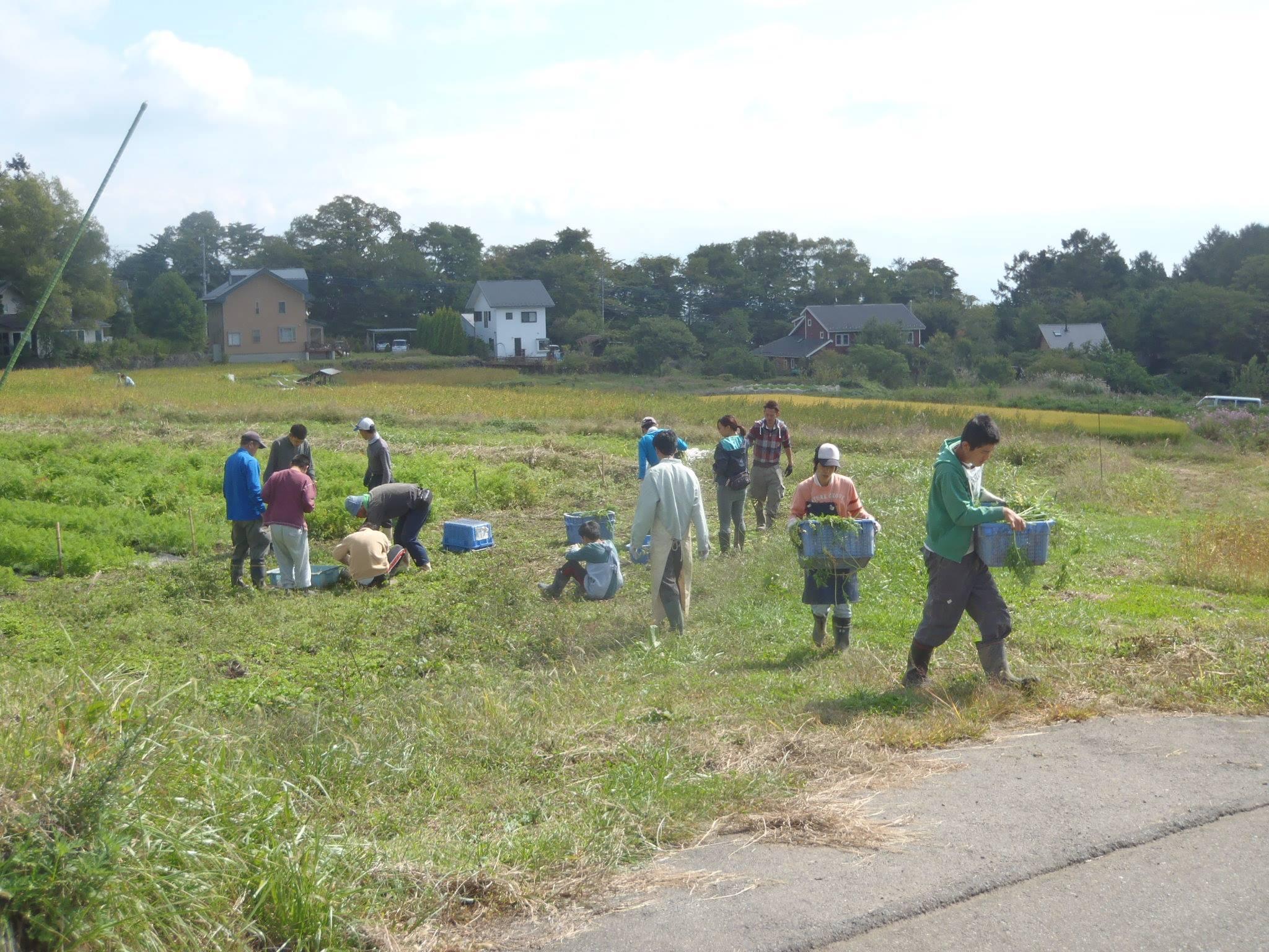 農と福祉の連携アドバイザーとして活動を行っています