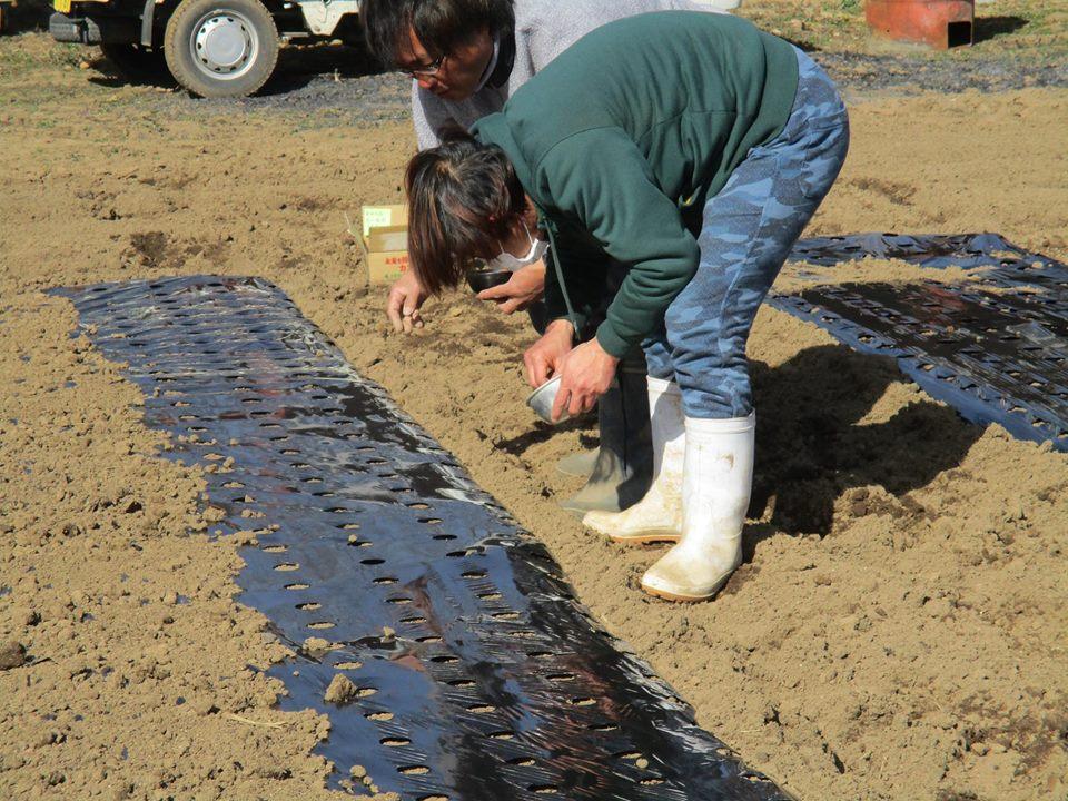 ツエノワ・プロジェクト にんじんの種まきを行いました