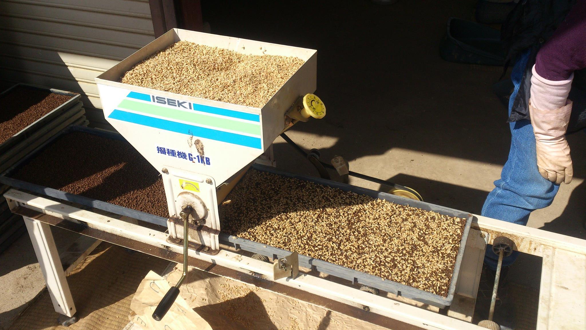 稲の苗作りのお手伝いをしました