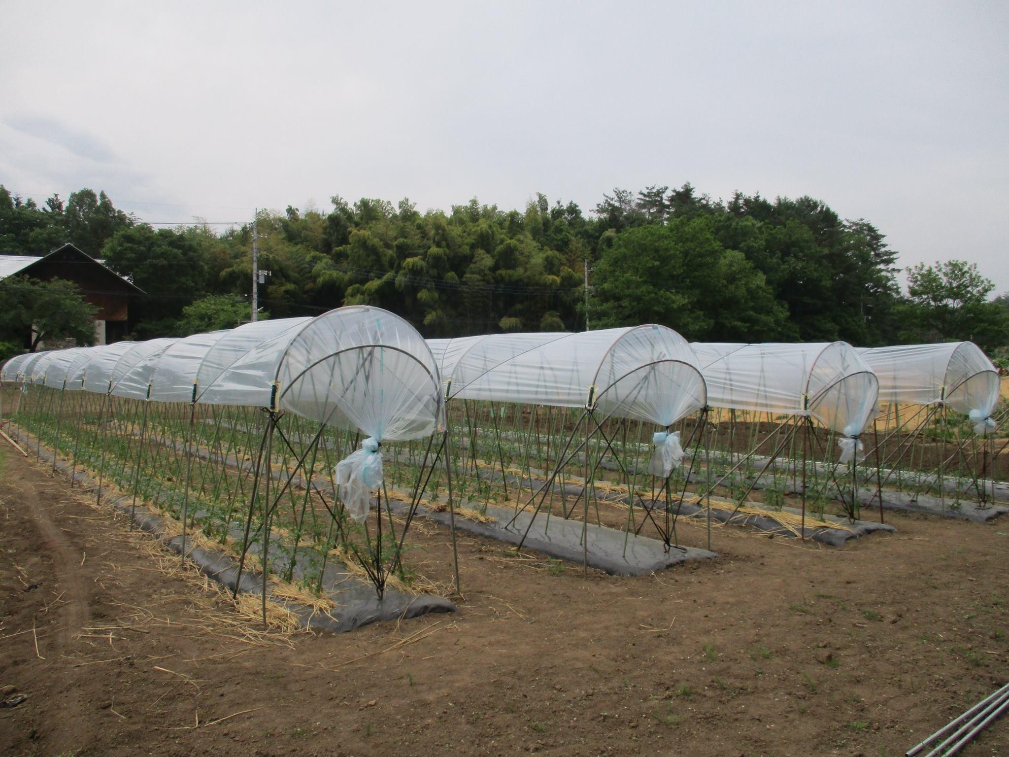 農福連携プロジェクト 活動しています