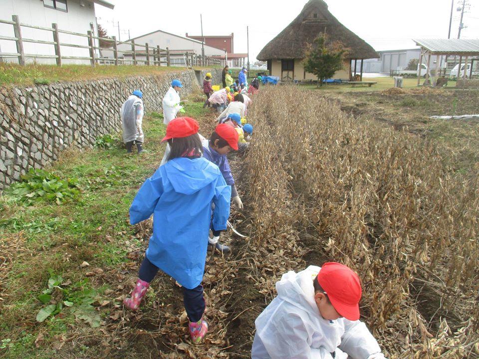 すがたを変える大豆〜授業のサポートをしています